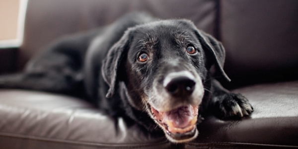 Rutina de Alimentación para Perro de Edad Avanzada