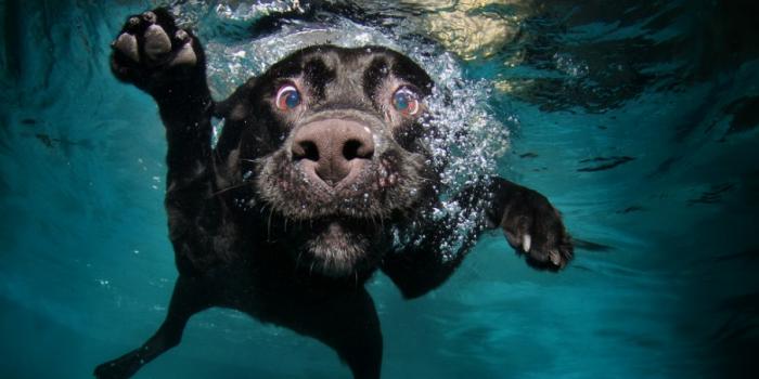 Después De Nadar