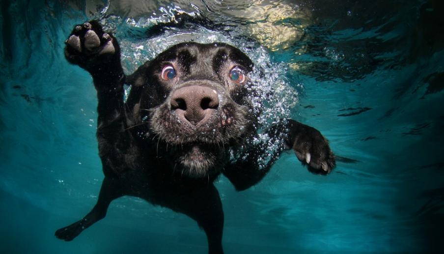 Llevar a tu perro a nadar