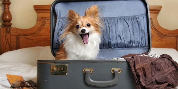 Si Mi Perro Va De Vacaciones