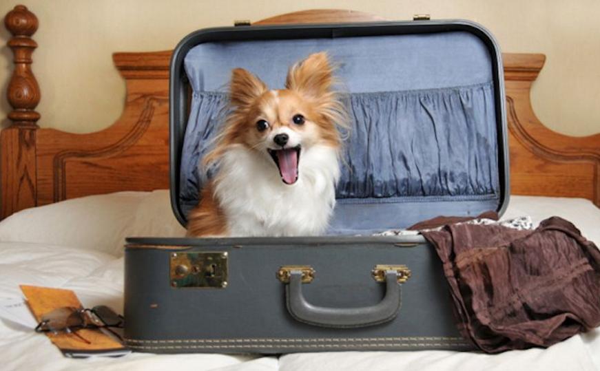 Si tu perro va de vacaciones contigo