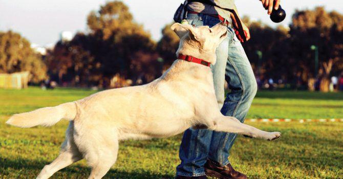 Jugar Con Mi Perro