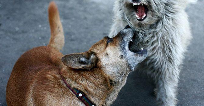 Dogfighting1
