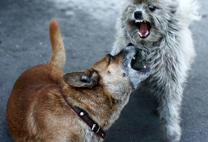 Agresión hacia otros perros