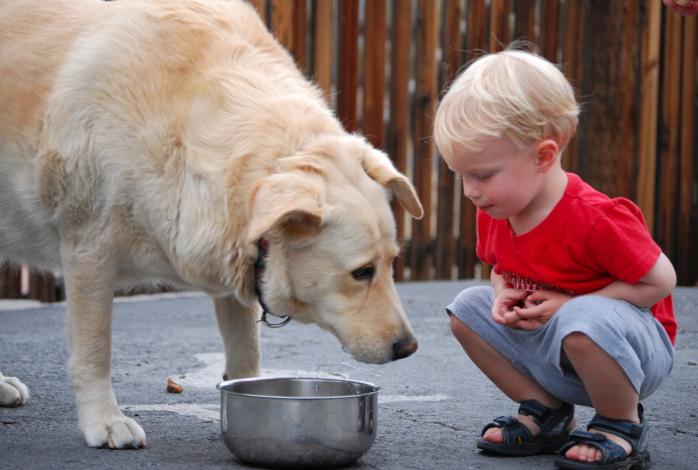 El Perro Senior y los Niños
