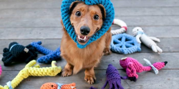 3 Ejercicios Mentales Para Tu Perro