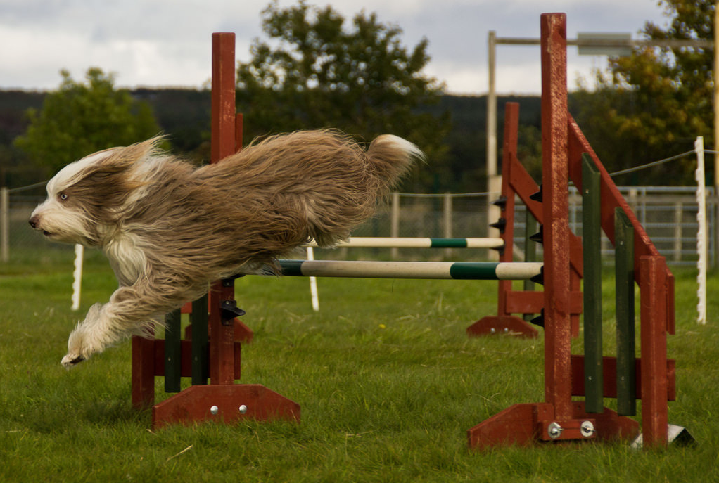 Deporte Canino: ¿Cuál? ¿Dónde?