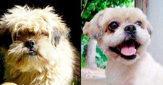 Mascotas Animales Perros 12221 MLC20056707392 032014 O