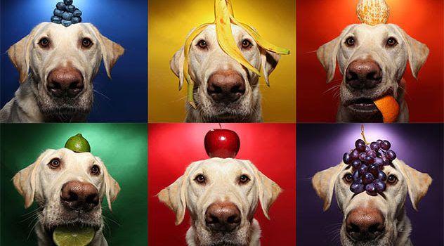 ¿Puedo Darle Frutas Y Verduras A Mi Super Cachorro?