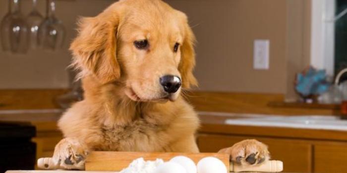 ¿Es Bueno Darle Huevo Crudo A Mi Perro?
