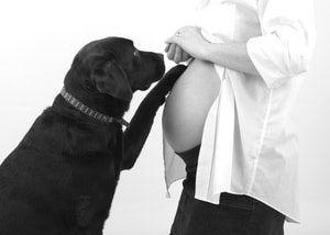 Dog & Baby Bump