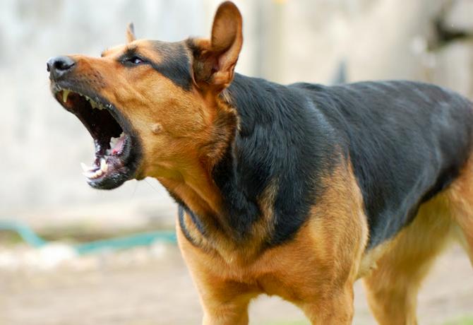 ladrido_perros