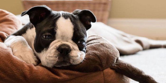 ¿Perro Deprimido? Síntomas Y Tips
