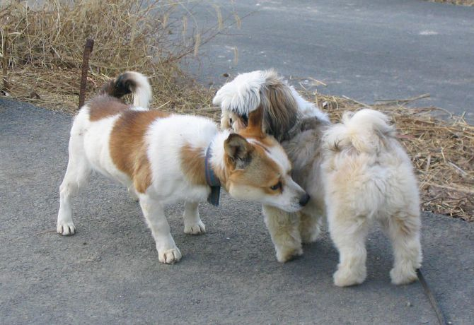 Presentando a dos perros