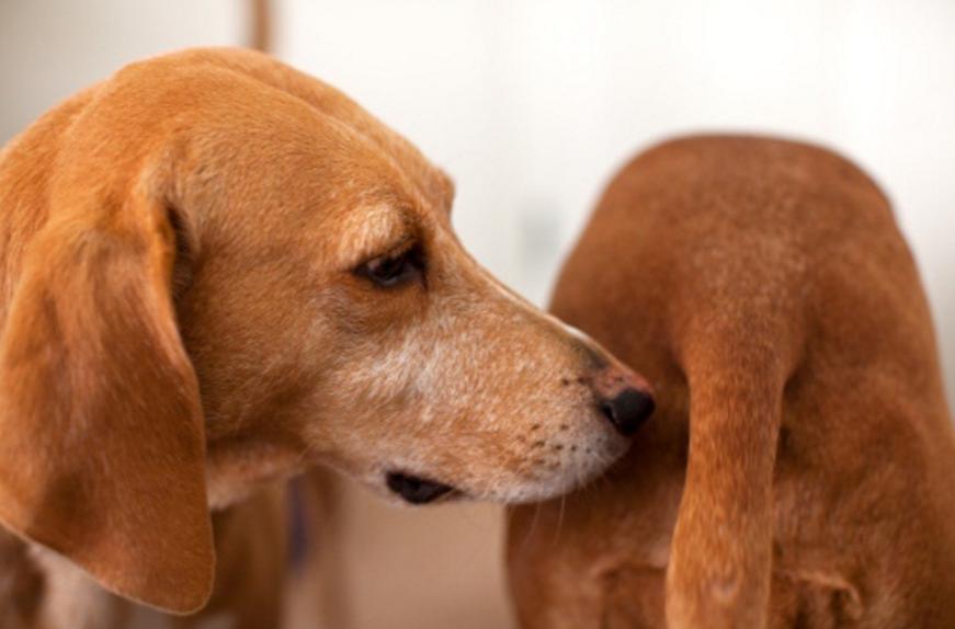Lo que le dice un trasero a tu perro