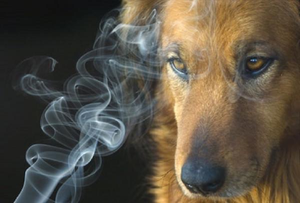 El humo de cigarro afecta a los perros