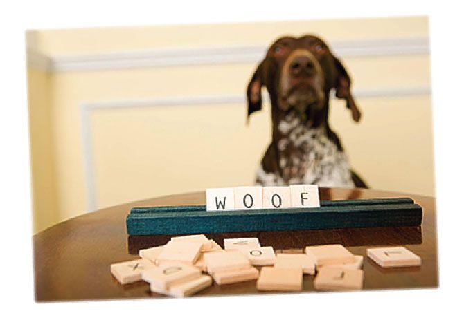 Un perro puede aprender + de 250 palabras