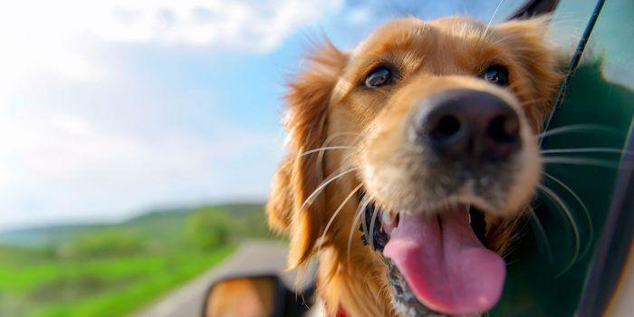 Filosofía Canina ¡Vive Como Perro!