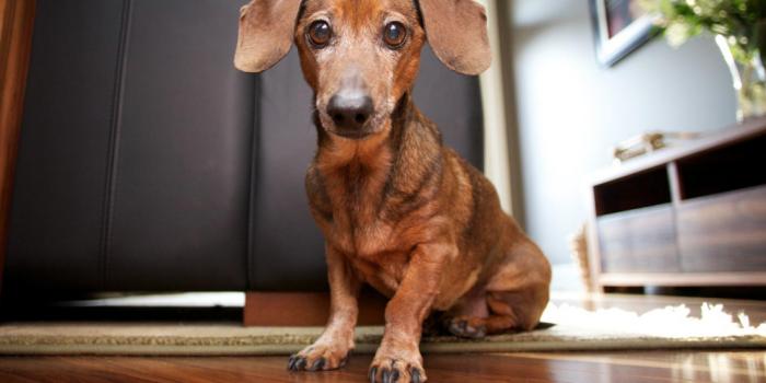 Perros Dentro De Casa