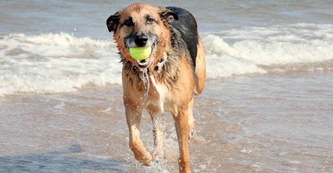 La Playa Y Mi Perro