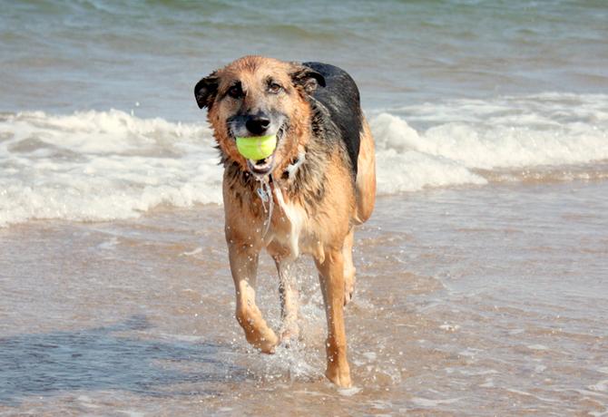 La Playa y tu Perro