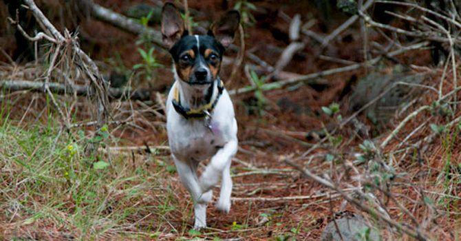 El Bosque Y Tu Super Cachorro