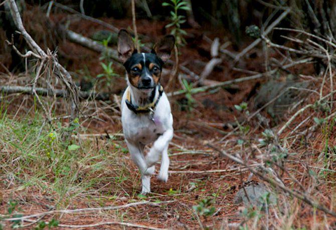 perro_bosque_insert