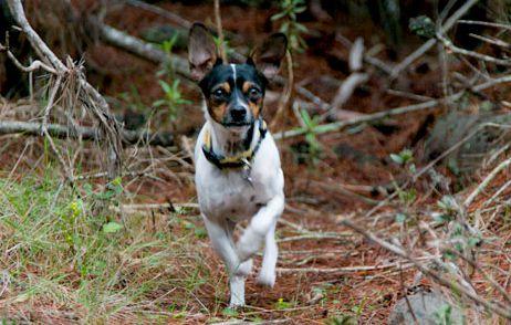 perro_bosque_inserts