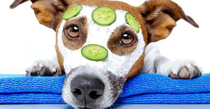 Consentir A Tu Perro ¿es Bueno O Malo?