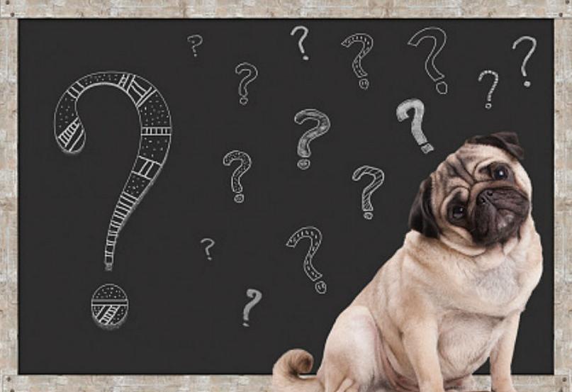 16 Mitos sobre los perros