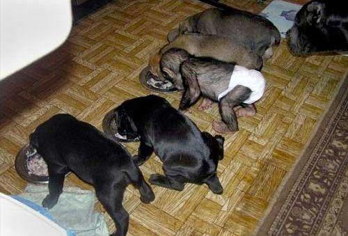La caseta de jade mama perro bebe chimpance for Caseta perro pequeno