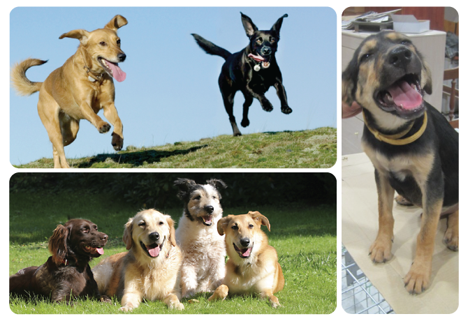 etapasfeatured-image