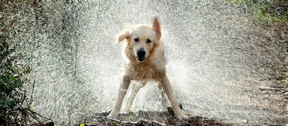 ¿Qué sucede cuando un perro mojado se sacude?
