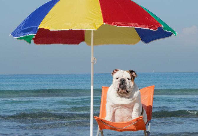 Bloqueador solar para perros