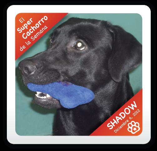 Shadow: Super Cachorro de la Semana