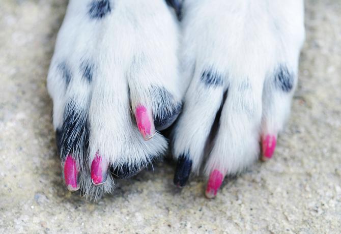 No le pintes las uñas a tu perro