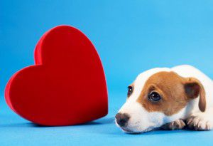 heart-and-dog