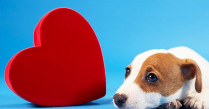 Heart And Dog