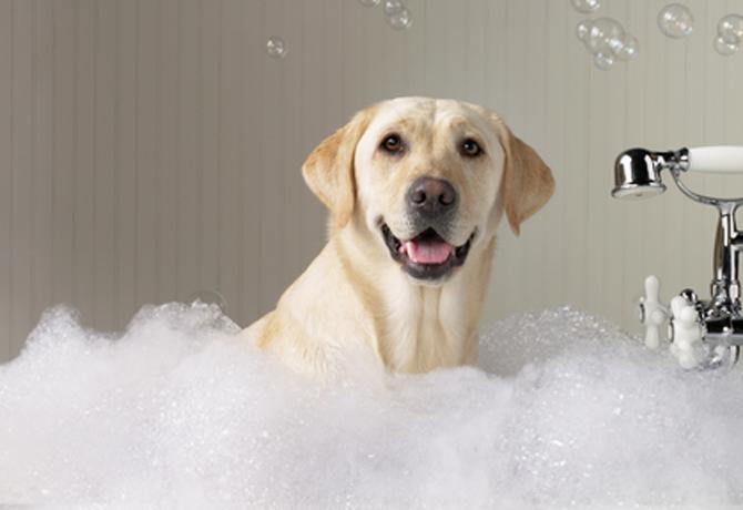 7 pasos para bañar a tu perro