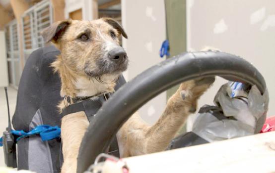 Perros Que Aprenden A Conducir