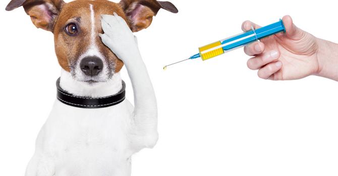 Ojo Con La Aplicación De Vacunas