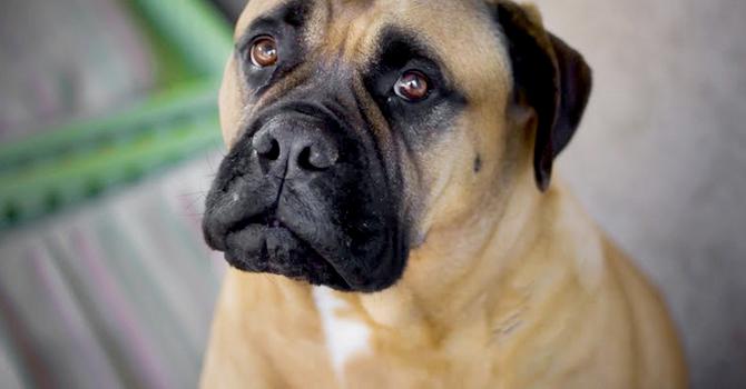 ¿Por Qué Mi Perro Tiene Gases?