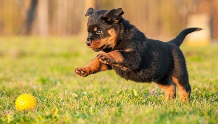Desparasitación en cachorros