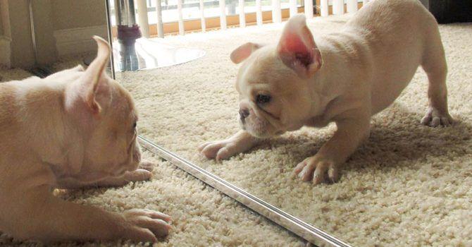 Espejo Cachorro