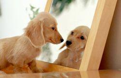 Los Perros ¿se Reconocen En El Espejo?