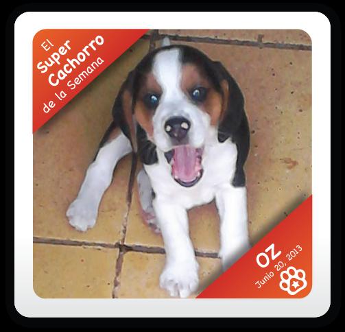 Oz: Super Cachorro de la Semana