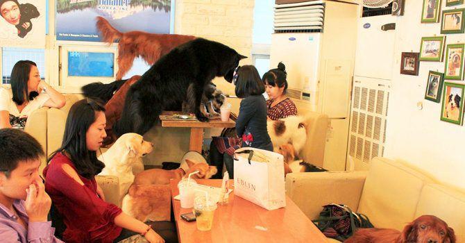 Cafeterias Seul