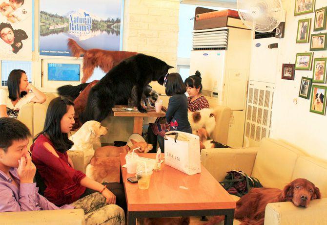 Cafeterías Caninas en Seúl