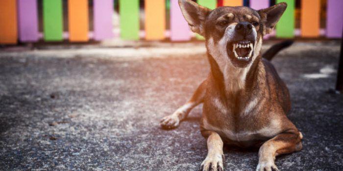 Mi Perro Gruñe Cuando Quiero Quitarle Un Objeto