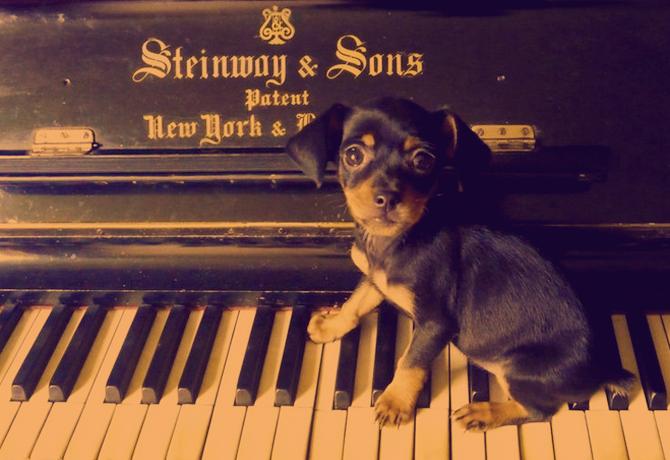 Perros, historias y canciones